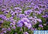 През 2020 ще се засадят над 20 хиляди декара с медоносни видове