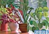 5 растения за по-чист въздух в дома ви