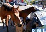 Смяна на ролите: джипове в планината, коне в града