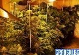 Ваксина и марихуана – това ли са основните ни ценности