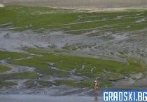 Предупреждение за опасни водорасли по бреговете на Франция