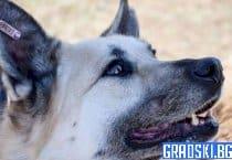717 кучета са били осиновени през настоящата година