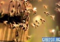 Пчелари срещу пестицидите