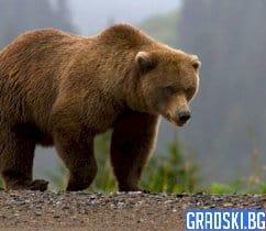 Ловец от Казанлък нападнат и ранен от мечка