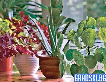 5 растения за по-чист въздух
