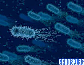Два случая на бубонна чума бяха регистрирани в Китай