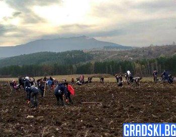 Хиляди души се включиха в залесяването на район край София