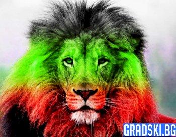 Кой ще опитоми лъва