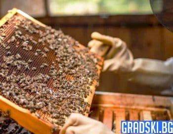 Държавата ще подпомогне финансово пчеларите у нас