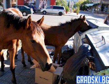 Коне ровят в кофа за боклук