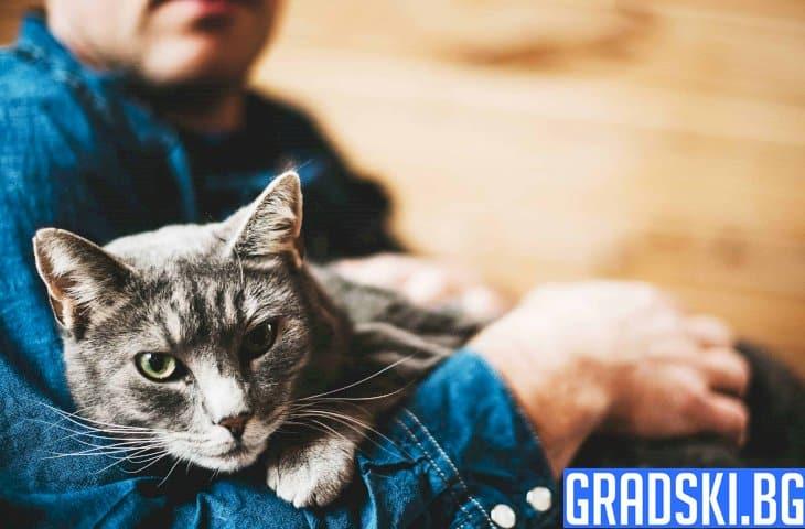 Как да разберете, че домашната котка ви обича