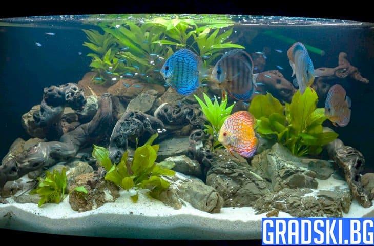 Избор на домашен аквариум