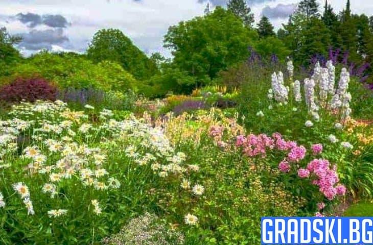 Задължителни за градината цветя