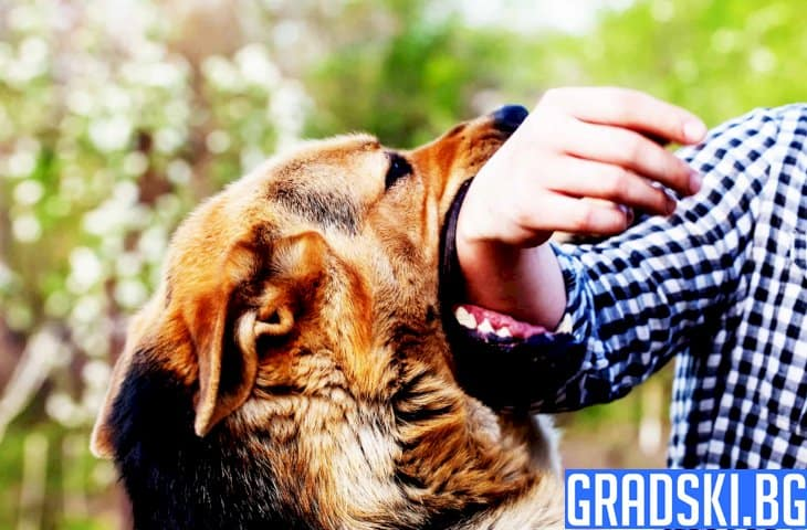 Кучета хапят деца в селата